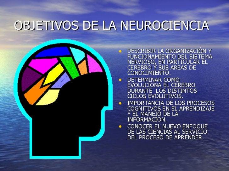 OBJETIVOS DE LA NEUROCIENCIA <ul><li>DESCRIBIR LA ORGANIZACIÓN Y FUNCIONAMIENTO DEL SISTEMA NERVIOSO, EN PARTICULAR EL CER...