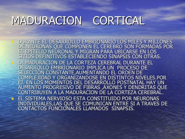MADURACION  CORTICAL <ul><li>DURANTE EL DESARROLLO EMBRIONARIO LOS MILES Y MILLONES DE NEURONAS QUE COMPONEN EL CEREBRO SO...