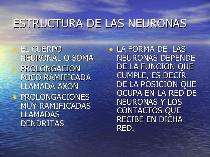ESTRUCTURA DE LAS NEURONAS <ul><li>EL CUERPO NEURONAL O SOMA  </li></ul><ul><li>PROLONGACION POCO RAMIFICADA LLAMADA AXON ...