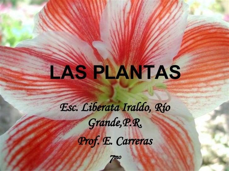 LAS PLANTAS Esc. Liberata Iraldo, Río Grande,P.R. Prof. E. Carreras 7 mo