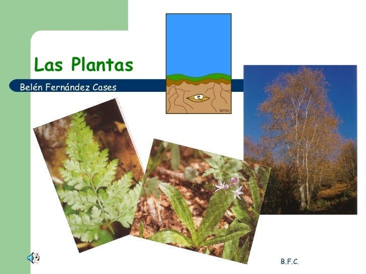 Las Plantas Belén Fernández Cases
