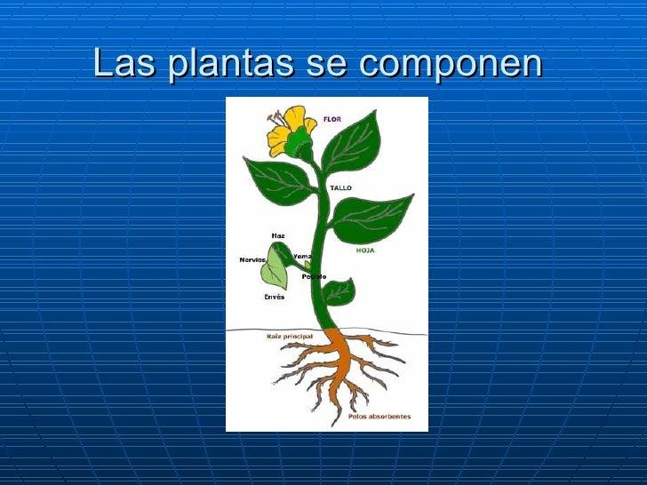 Las plantas se componen