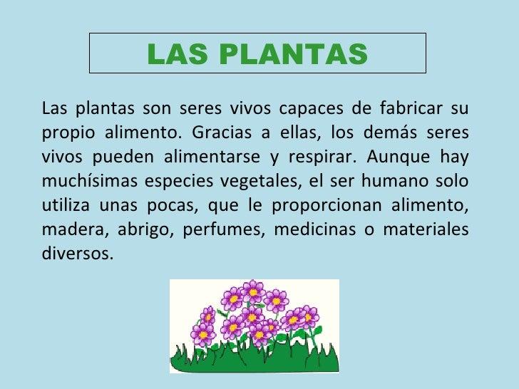 LAS PLANTAS Las plantas son seres vivos capaces de fabricar su propio alimento. Gracias a ellas, los demás seres vivos pue...