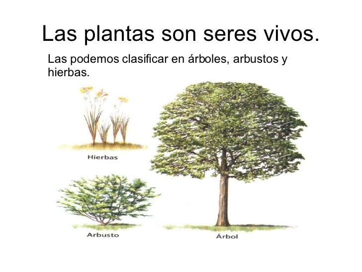 Las plantas y los anomales for Plantas y arbustos de exterior