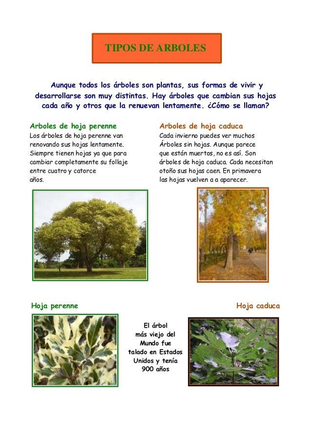Las plantas1 for Diferencia entre arboles de hoja caduca y hoja perenne