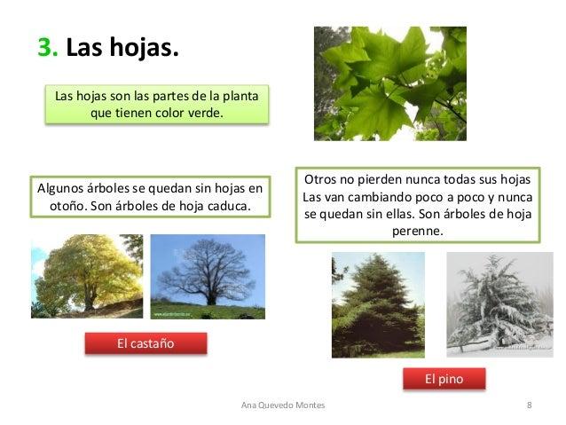 Las plantas material adaptado for Como se llaman los arboles que no pierden sus hojas
