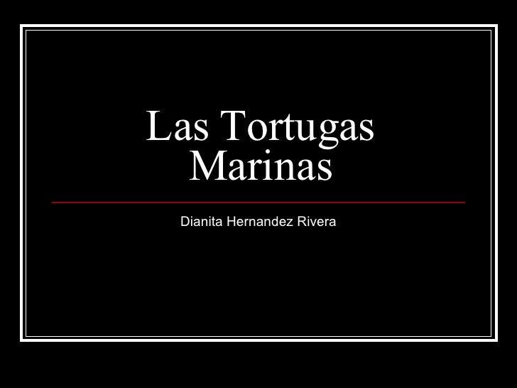 Las Tortugas Marinas Dianita Hernandez Rivera