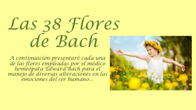 Las 38 Flores de Bach A continuación presentaré cada una de las flores empleadas por el médico homeópata Edward Bach para ...