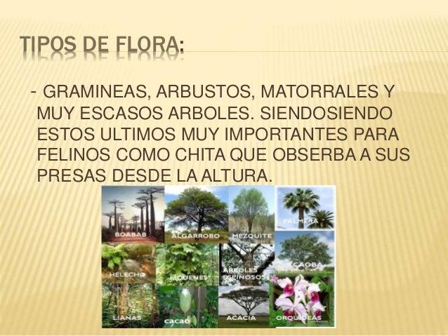 La sabana y sus caracteristicas for Tipos de arboles y sus caracteristicas