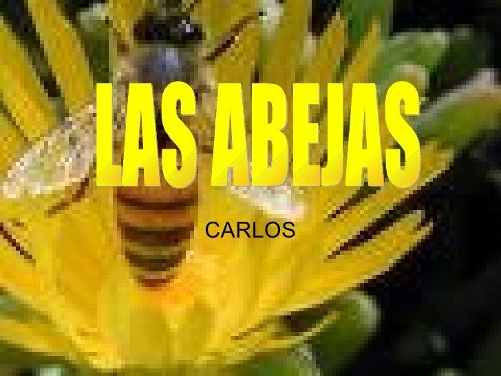 CARLOS LAS ABEJAS