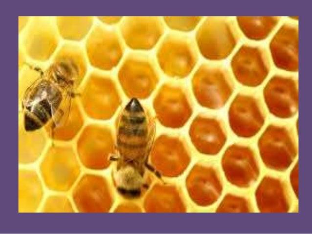 Las abejas - Proyecto con Nivel Inicial