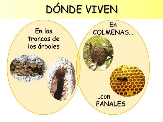 Image: Las abejas para Educación Infantil
