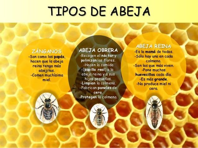 Las abejas para Educacin Infantil