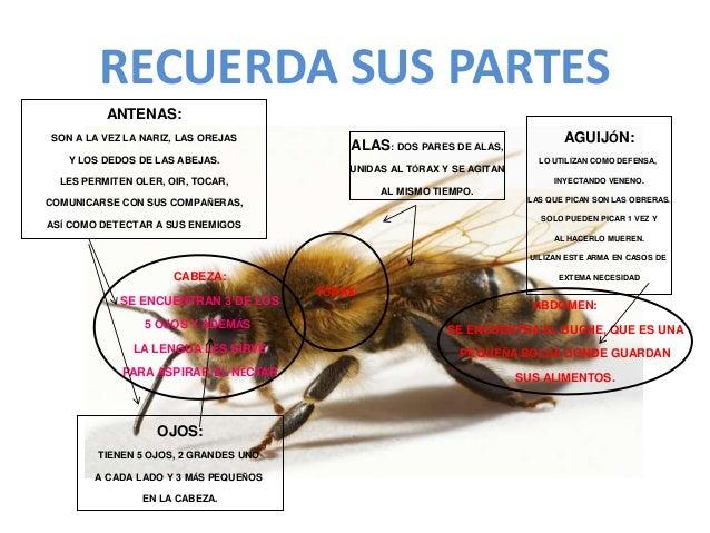 Las abejas1