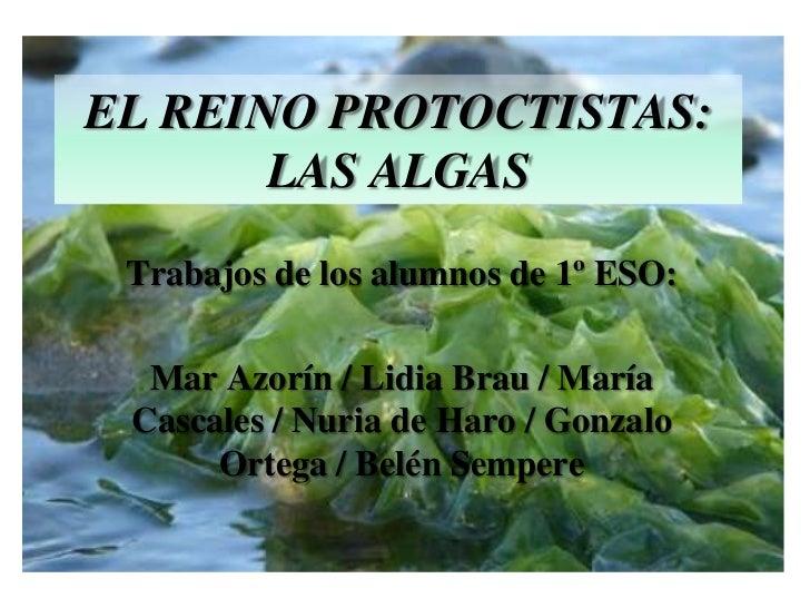 EL REINO PROTOCTISTAS: LAS ALGAS<br />Trabajos de los alumnos de 1º ESO:<br />Mar Azorín / Lidia Brau / María Cascales / N...