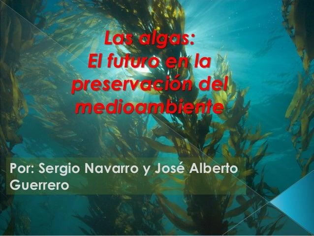 Las algas: El futuro en la preservación del medioambiente Por: Sergio Navarro y José Alberto Guerrero