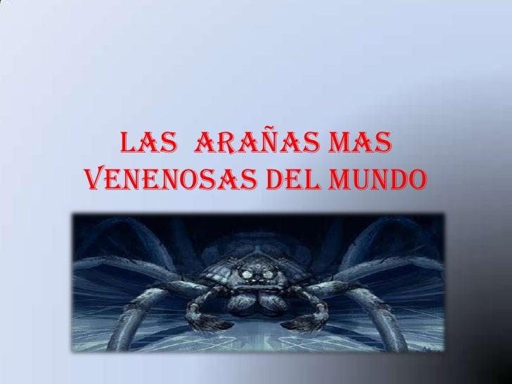 Las arañas masvenenosas del mundo