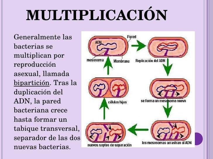 Las Bacterias, Presentacion