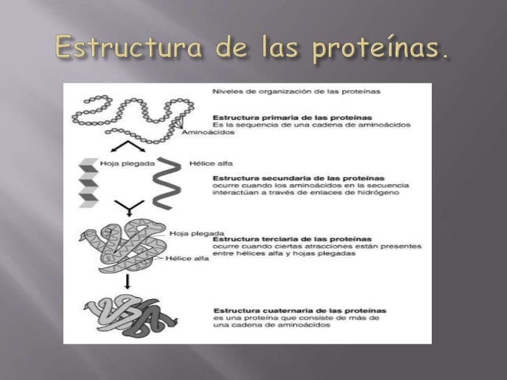 Estructura de las proteínas.<br />