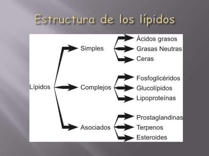 Estructura de los lípidos<br />
