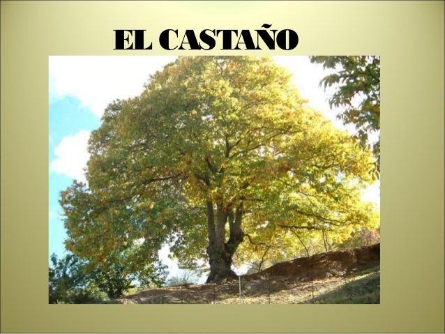 EL CASTAÑO