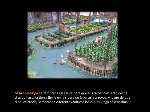 Las Chinampas De Los Aztecas