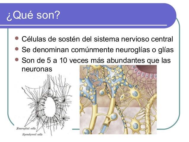 ¿Qué son?  Células  de sostén del sistema nervioso central  Se denominan comúnmente neuroglías o glías  Son de 5 a 10 v...