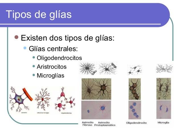 Tipos de glías  Existen  Glías  dos tipos de glías:  centrales:   Oligodendrocitos  Aristrocitos  Microglías