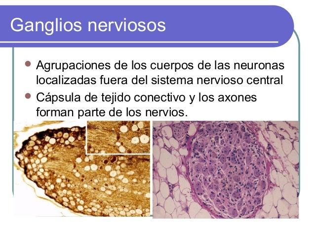Ganglios nerviosos  Agrupaciones  de los cuerpos de las neuronas localizadas fuera del sistema nervioso central  Cápsula...