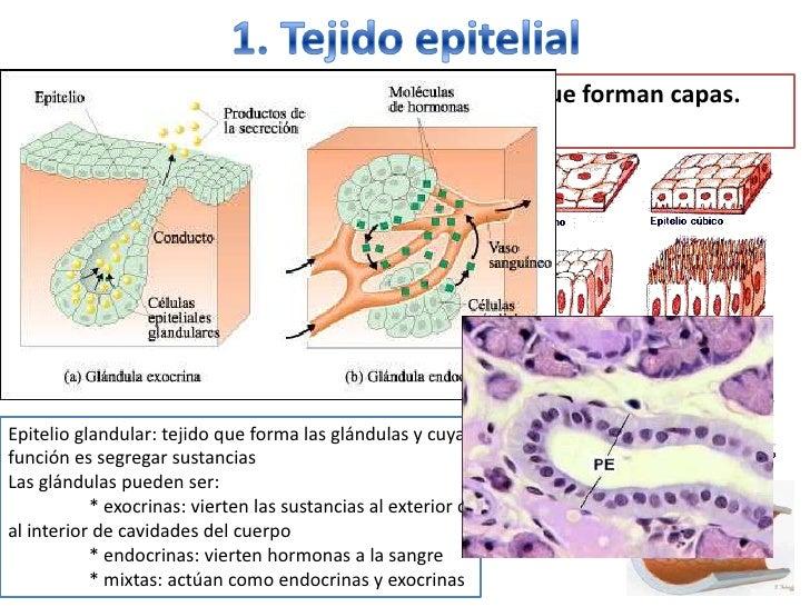 Suficiente Las células humanas ZQ56