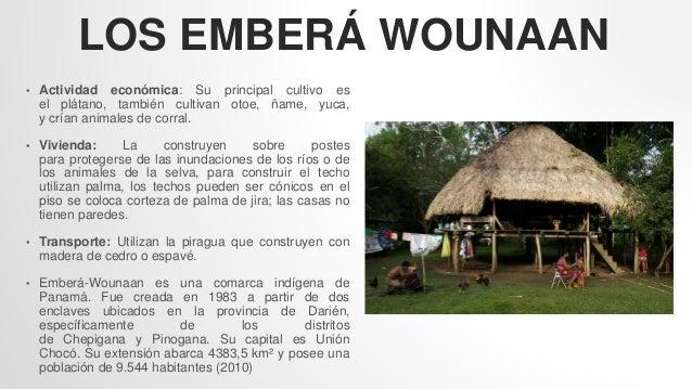 LOS EMBERÁ WOUNAAN • Actividad económica: Su principal cultivo es el plátano, también cultivan otoe, ñame, yuca, y crían a...