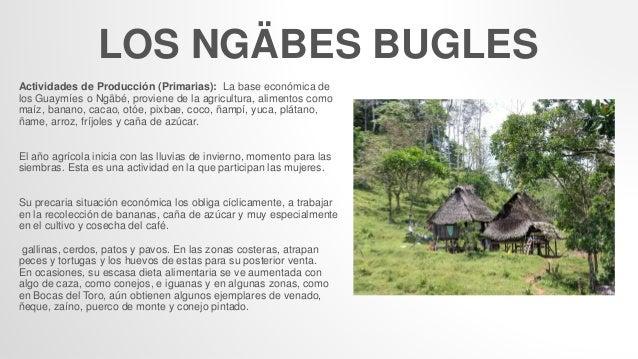 LOS NGÄBES BUGLES Actividades de Producción (Primarias): La base económica de los Guaymíes o Ngäbé, proviene de la agricul...