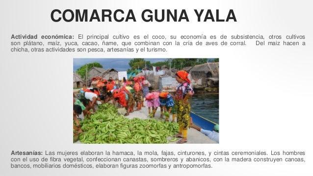 COMARCA GUNA YALA Actividad económica: El principal cultivo es el coco, su economía es de subsistencia, otros cultivos son...