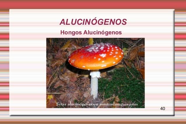 ALUCINÓGENOSHongos Alucinógenos                      40