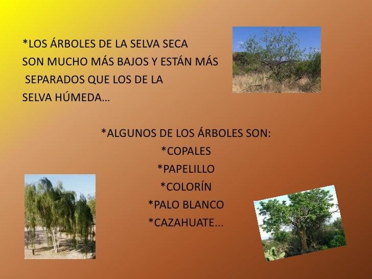 La selva h meda y seca for Las caracteristicas de los arboles