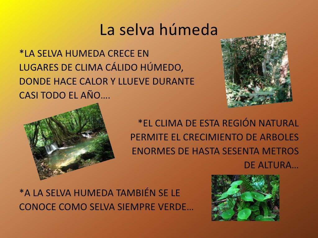 La selva h meda y seca for Caracteristicas de arboles frondosos