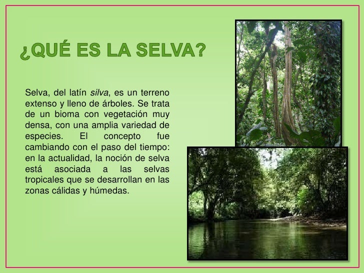 La selva tropical for El tiempo en macanet de la selva