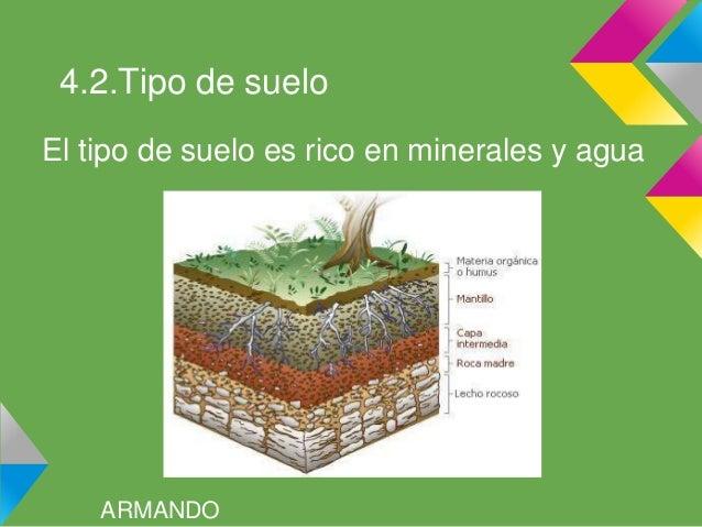 La selva tropical for Tipo de suelo 1