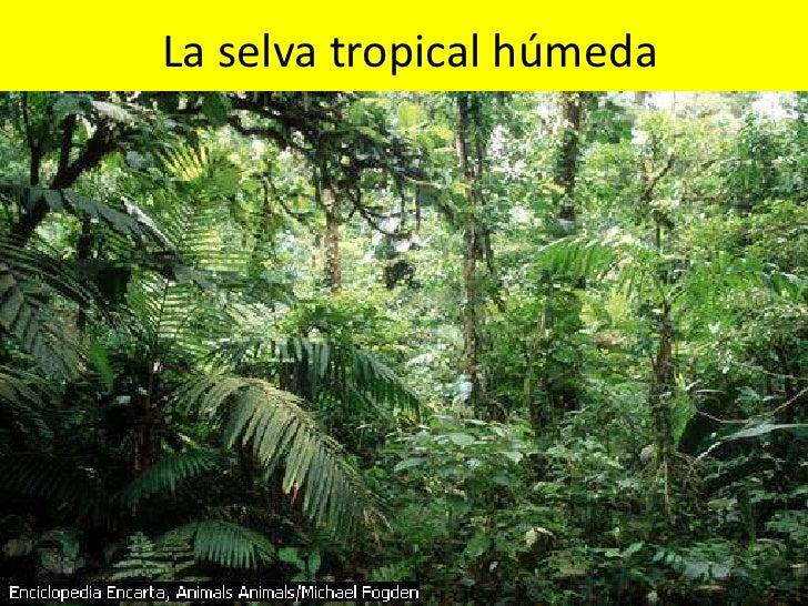 La selva tropical húmeda