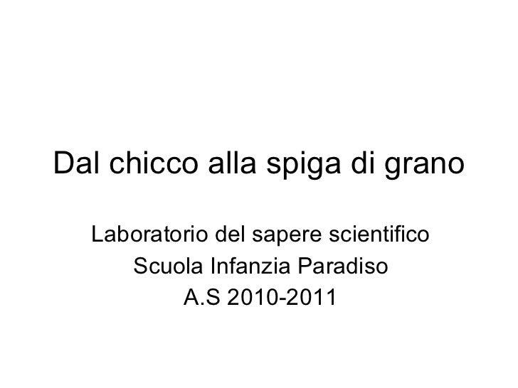 Dal chicco alla spiga di grano Laboratorio del sapere scientifico Scuola Infanzia Paradiso A.S 2010-2011