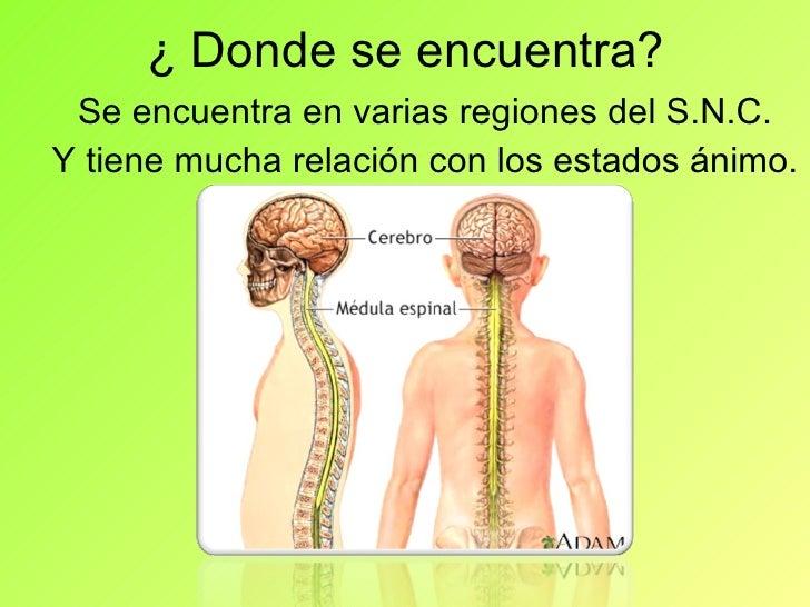 La serotonina 2 for Donde se encuentra el marmol