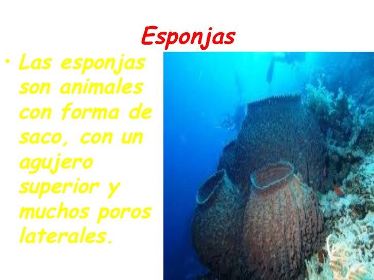 Las esponjas y las medusas - Como se alimentan las medusas ...