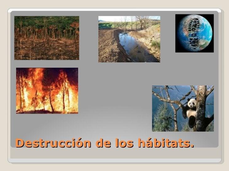 Destrucción de los hábitats.