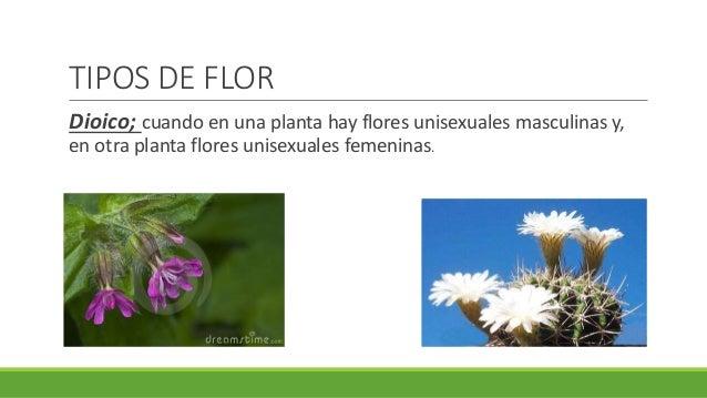 Las Flores Partes Funciones Y Tipos