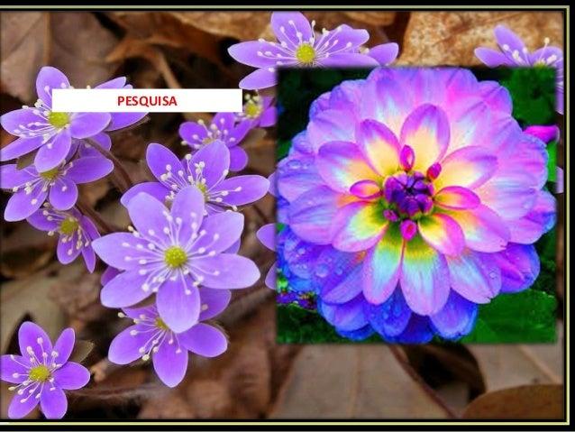 Las flores mas exoticas del mundo for Plantas exoticas online