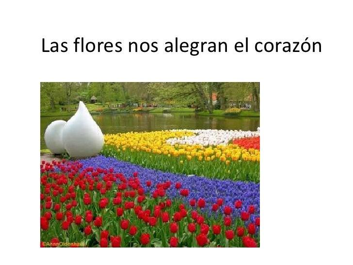 Las flores nos alegran el corazón<br />