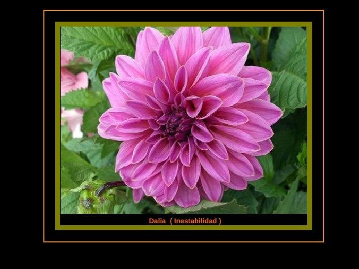 Las flores y el significado de sus nombres ii parte for Plantas decorativas con sus nombres