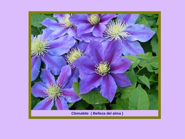 Las flores y el significado de sus nombres 1 for Plantas decorativas con sus nombres