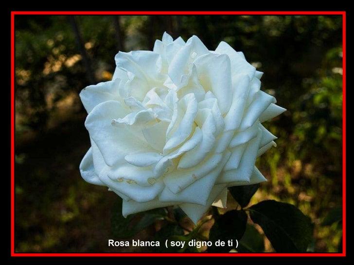 Las flores y el significado de sus nombres iv parte y final - Significado rosas blancas ...