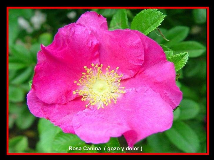 Las flores y el significado de sus nombres iv parte y final for Plantas decorativas con sus nombres
